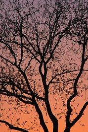 Tree branches in silhouette against a sunset sky, photograph by Brent VanFossen