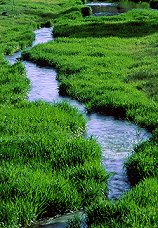 Stream of water moving through a grassy field, photograph by Brent VanFossen
