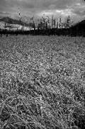 expalaskagrassstumps.jpg