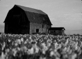 Photo showing example of shallow exposure of a barn with flowers out of focus in the foreground