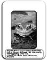 Image of a frog inside of a slide mount
