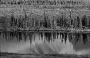 Closeup of reflection of mountain and trees in a lake in Alaska