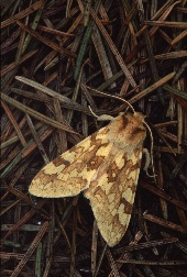Moth at an angle for a more interesting compositon, photograph by Brent VanFossen