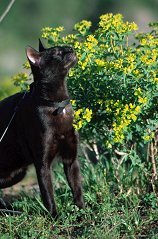 Dahni takes time out to sniff the flowers at Gamla National Park in Israel