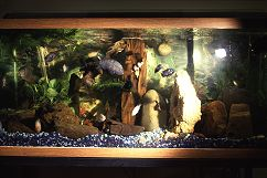 Our fish tank capturing the brilliant reflection of the camera flash, photo by Lorelle VanFossen