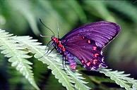 Butterfly, photograph by Brent VanFossen