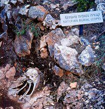 Remains of a burial from thousands of years ago found at the Carmel Caves. Photo by Lorelle VanFossen