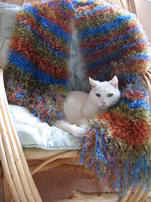 My mothers cat, Brother, poses with my knitted scarf, aka caterpillar