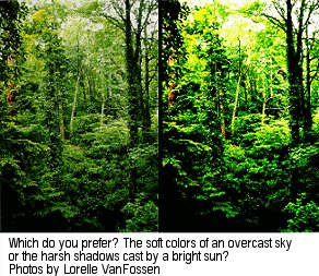These two photographs show before and after waiting for a cloud to pass by, casting a softer light on the forest.  Photos by Lorelle VanFossen