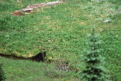 Even with 700mm, the bear is still a dot. Photo by Brent VanFossen