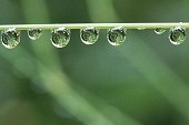 Circular water droplets on grass, photograph by Brent VanFossen