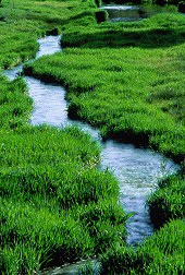 Stream of water slowly moves through the grasses, photograph by Brent VanFossen