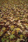 A field of leaves repeats on and on like a parade, photograph by Brent VanFossen