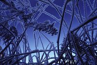 Frost on grass viewed from underneath, photo by Brent VanFossen