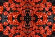 Red Tulips PhotoQuilt, photo and PhotoQuilt by Lorelle VanFossen