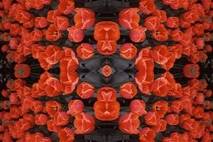 Red Tulips PhotoQuilt II, photo by Brent VanFossen