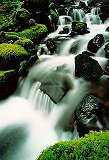 Solduc Falls, Olympic National Park, photo by Brent VanFossen