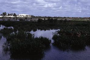 The water treatment plant is present in the background of the wetlands, photo by Brent VanFossen