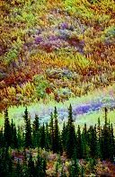 Alaska tundra in Fall, Denali, Alaska. Photo by Brent VanFossen