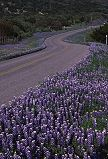 Texas road in spring, photo by Brent VanFossen