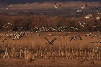 bosquebirdsflighta