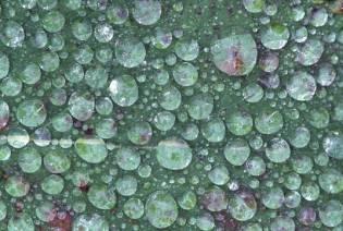 leafwatergrna