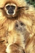 monkeywhitea