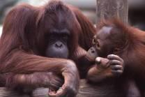 orangchild1a