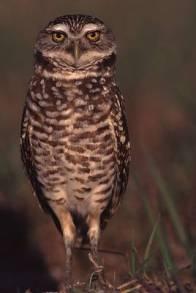 owlburrow1a