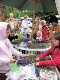 lavender festival 2009 (26)