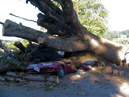 Tree Crushes Two Cars Near Laurelwood Oregon Taking Your Camera