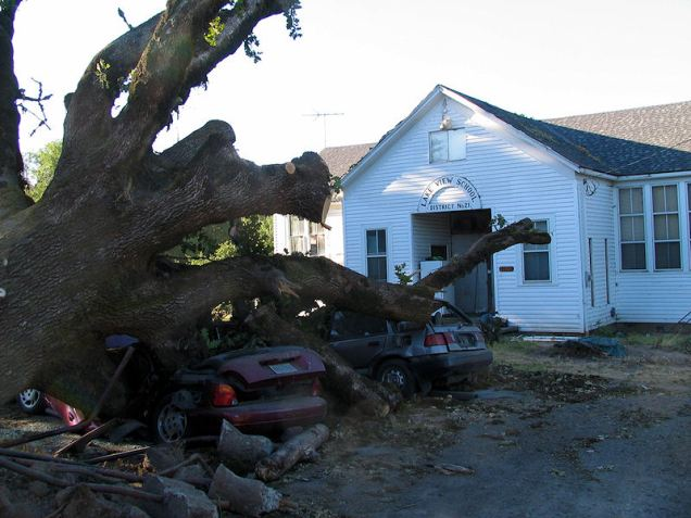 tree crushes cars lakeview school
