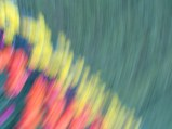 tulip blur circles 1 lorelle vanfossen