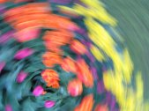 tulip blur circles 21 lorelle vanfossen