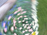 tulip blur circles 3 lorelle vanfossen
