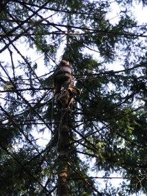 dj tree - cat in bag 2