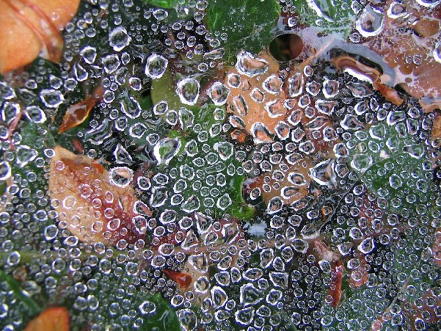 Water droplets on sheet web - photography by Brent VanFossen.