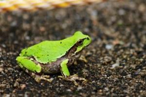 1313_frog-540x360