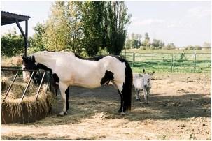 Horses at Terra Nue Farm