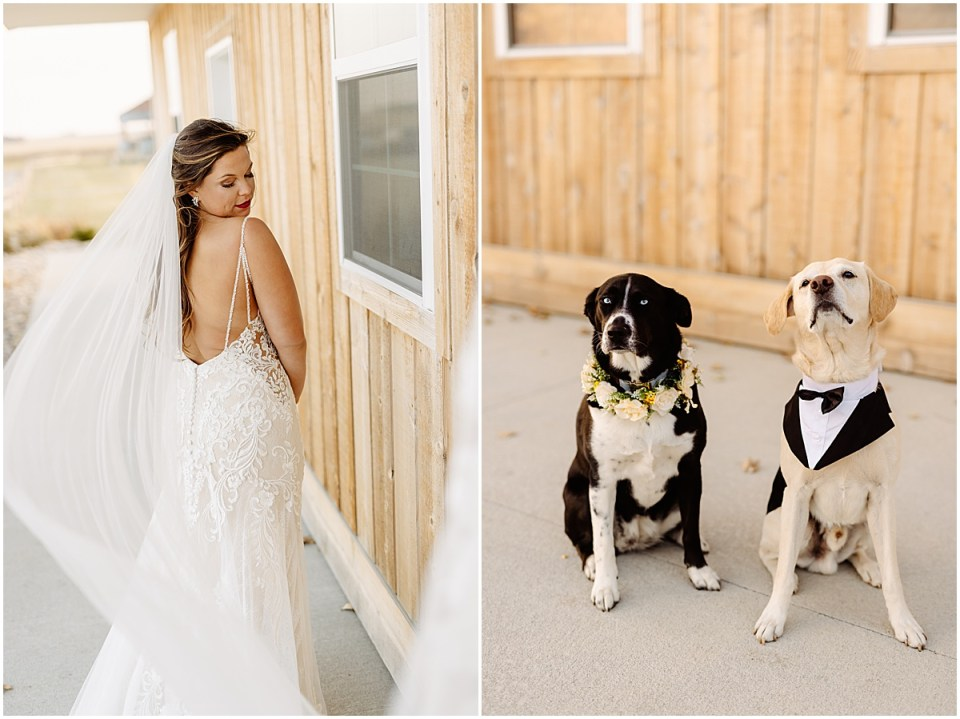 Wedding dress and dog details