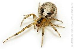 SpiderModelingReference_21