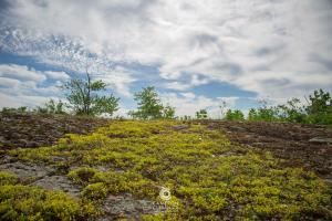 CameronCurranPhotography-14