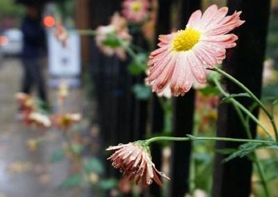 2016-Sunshine-on-a-Rainy-Day-wm