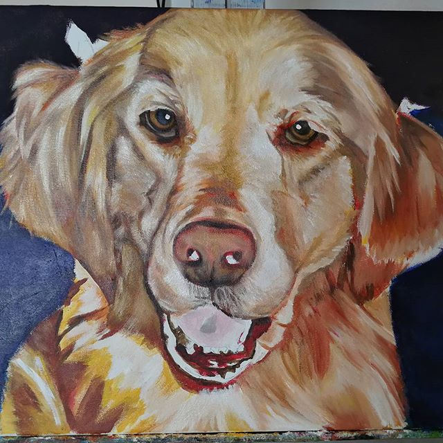 W.I.P. 80% CompleteMaggieGolden Retriever16x20 Oil over Acrylic Commissioned Painting.Refining and blending the oil paint over the base acrylic and working in details. Still need plenty of work on the mouth, nose, and eyes.#ny #nyc #bigapple #newyork #newyorknewyork #newyorkcity #manhatten #eastharlem #ilovenyc #photooftheday #igersofnyc #nylove #newyorkart #newyorklife #newyorkstyle #newyorkartist #canadianartist #newyork_instagram #petportrait #petpainting #goldenretriever #goldenretrieversofinstagram #oilpainting #art #paint #artistforhire #commission #goldenretrieversofig