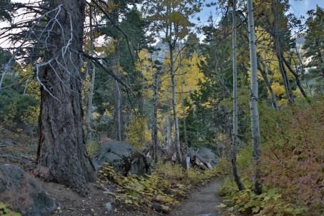 CameronFrostPhotography_Tahoe12