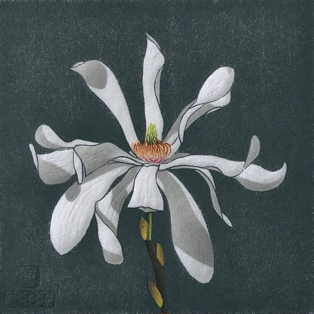 Magnolia Stellata woodblock print by Claire Cameron-Smith