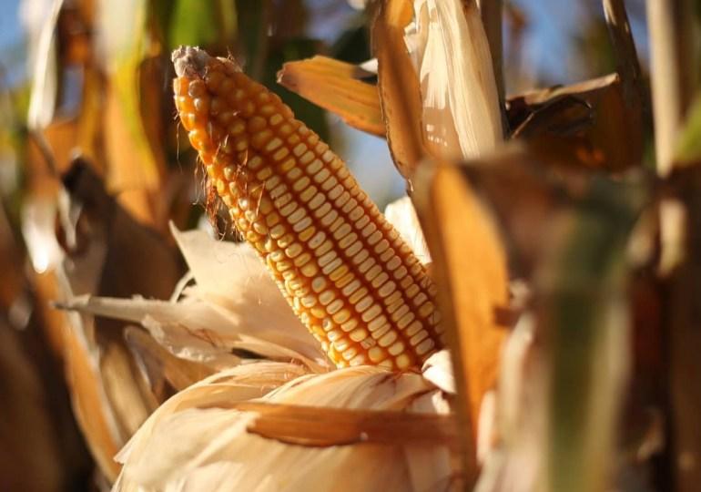 Cameroun-Covid-19 : comment éviter une crise alimentaire (Décryptage)