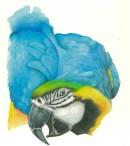 pappagallo - acrilico liquido