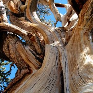 Tree Essences