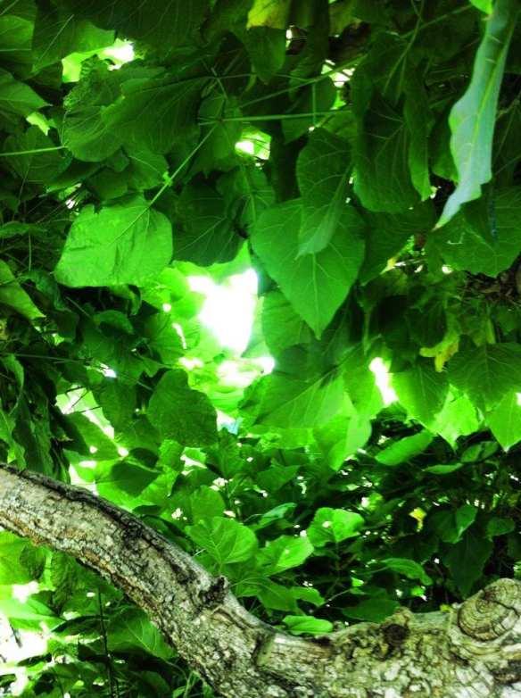 Heart Amongst Tree Leaves 2015